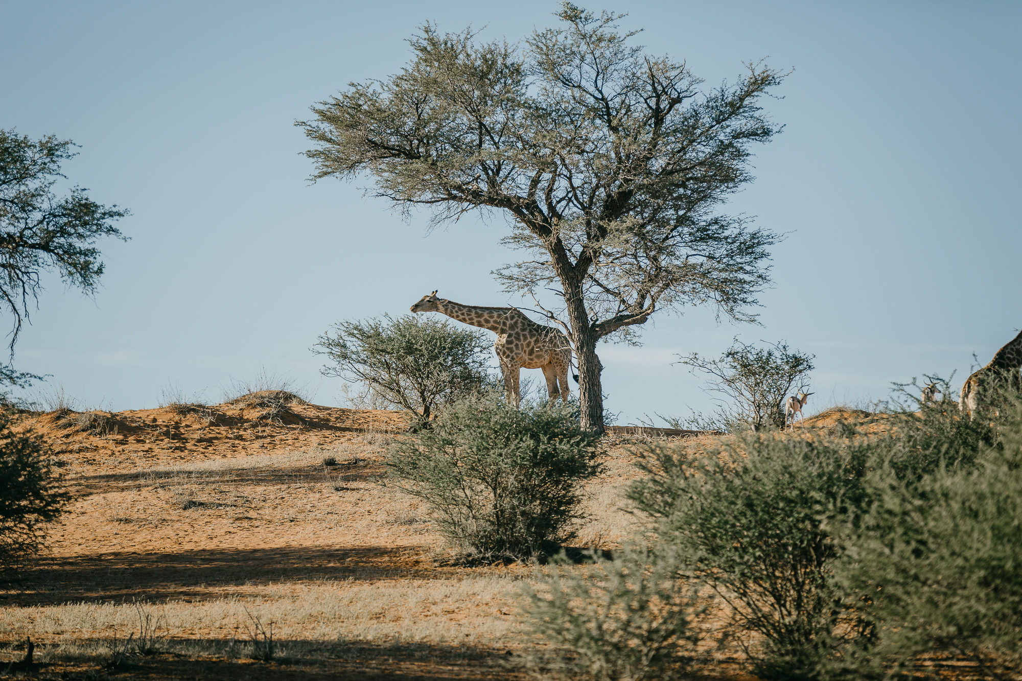 061518_Namibia_PIXd2camKayla_00626.jpg