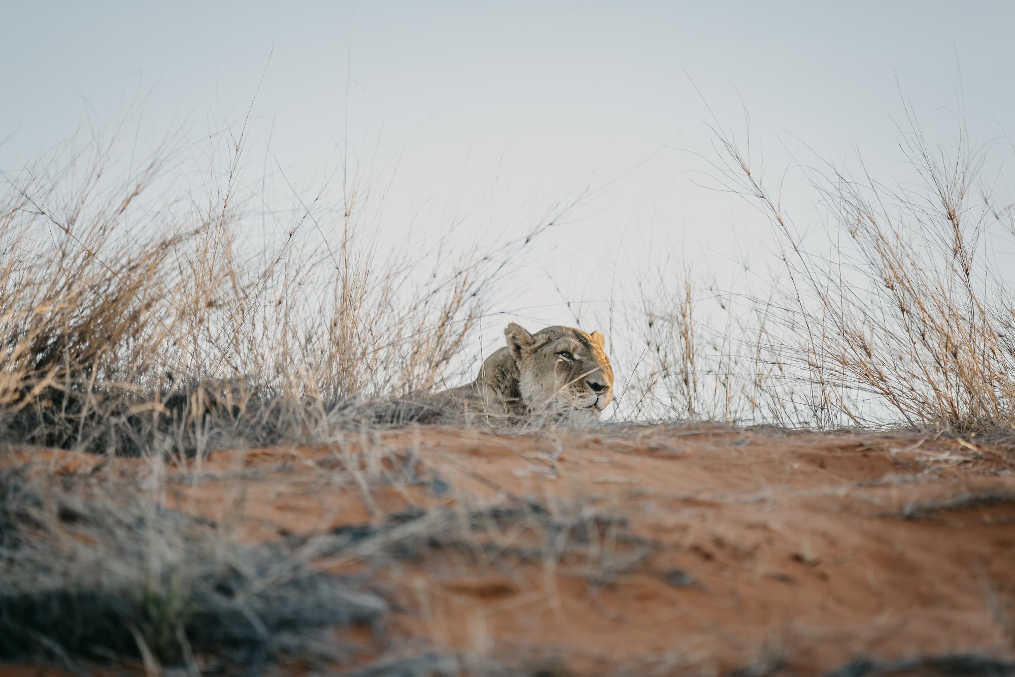 061518_Namibia_PIXd2camKayla_00671.jpg