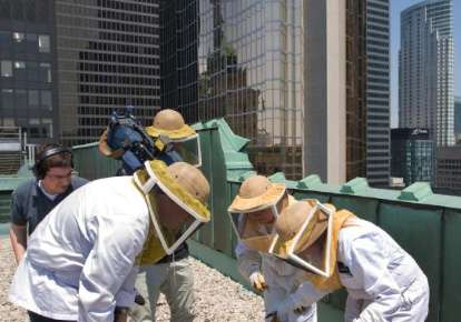 Looking for General Information on Bees?