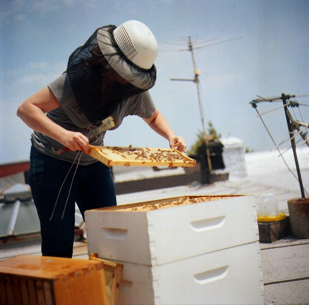 Already are a beekeeper?