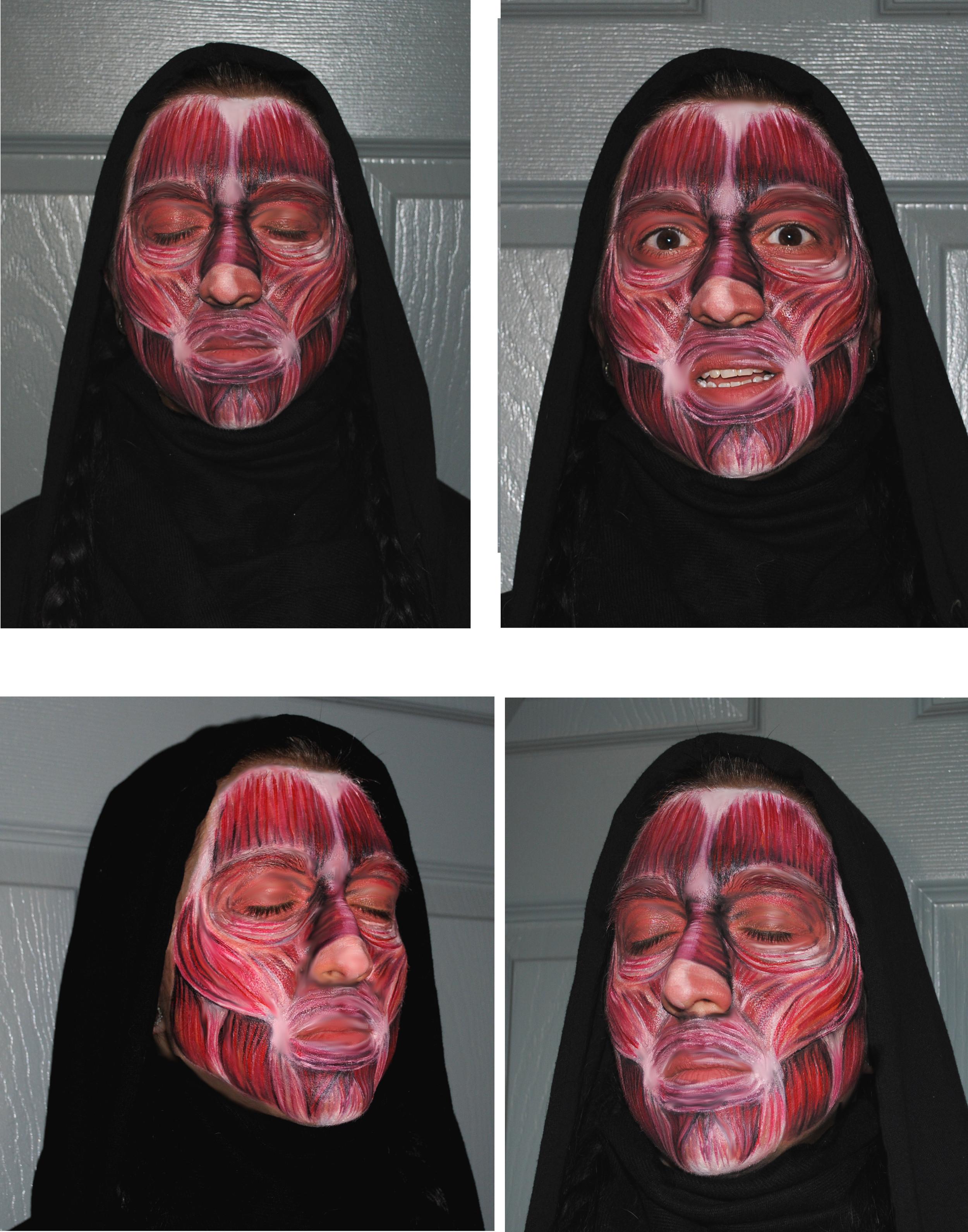 Facial Muscular System
