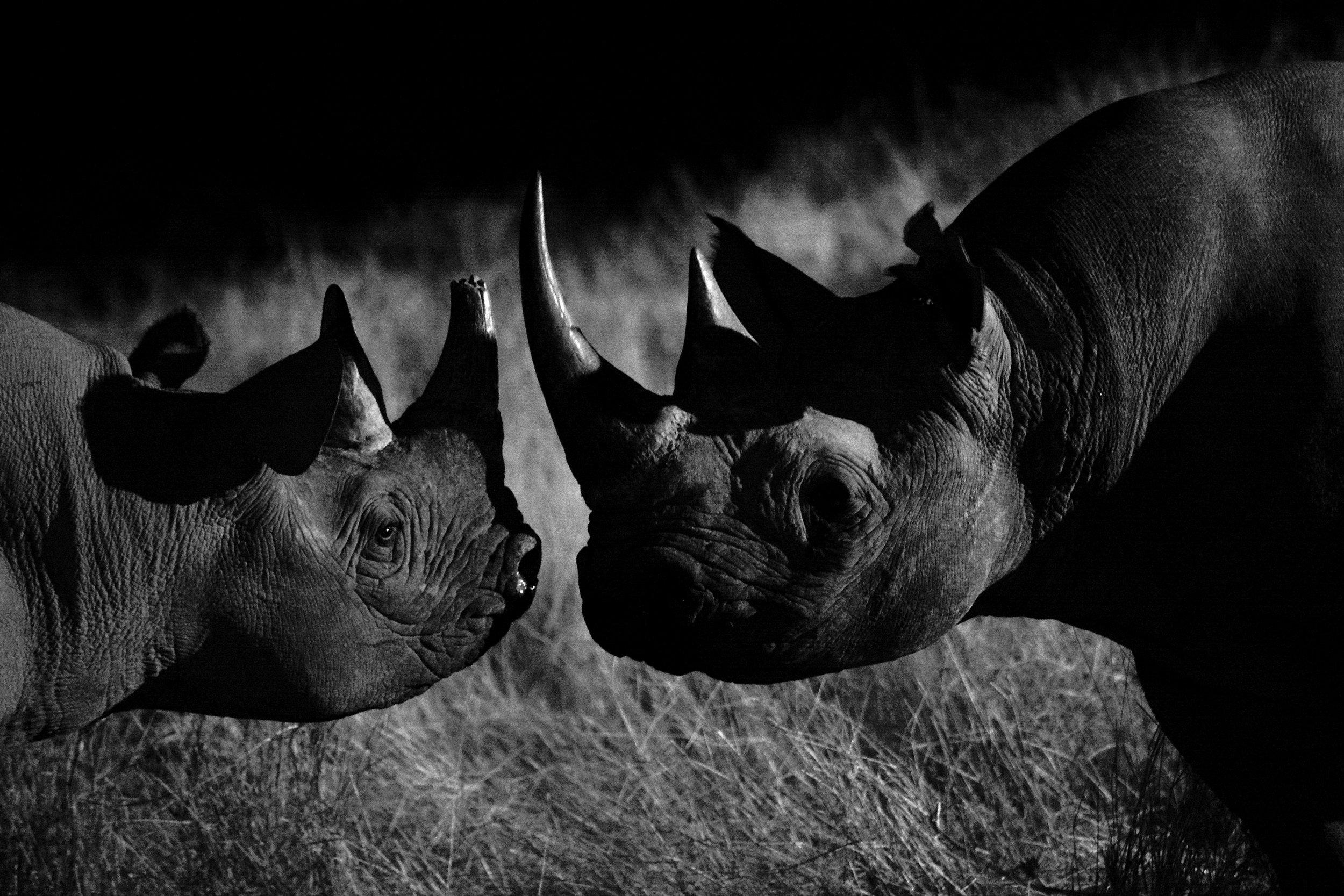 Rare black rhino encounter.JPG