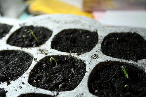 seed_starts.jpg