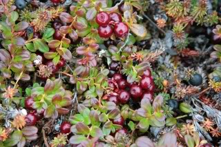 cranberries-1.jpg