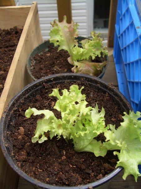 paulas-salad.jpg