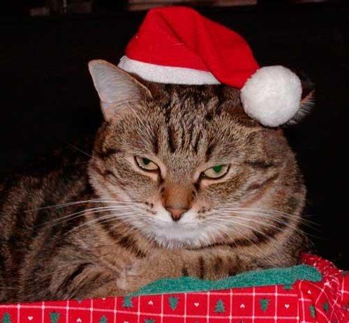cat-in-santa-hat.jpg