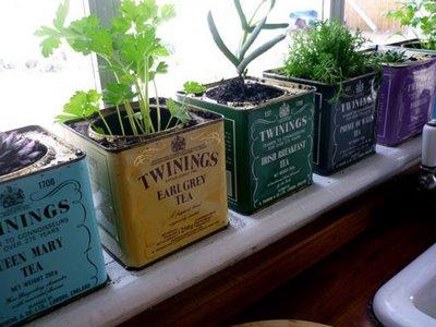 Windowsill-Garden-in-Tea-Tins.jpg