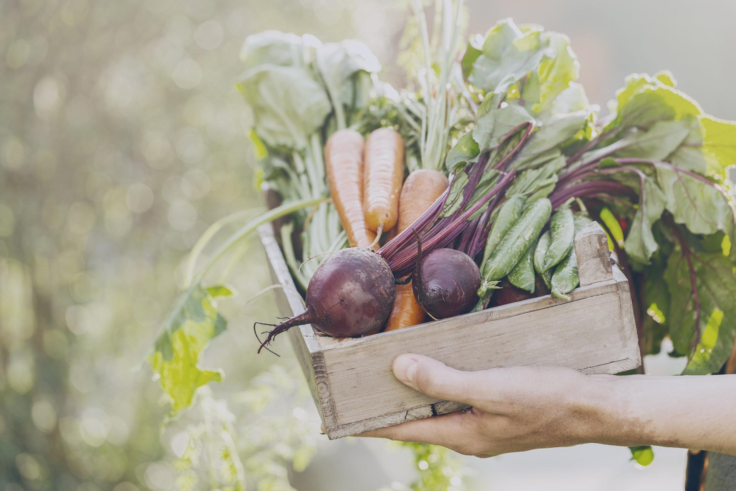 Box of Root veggies.jpg
