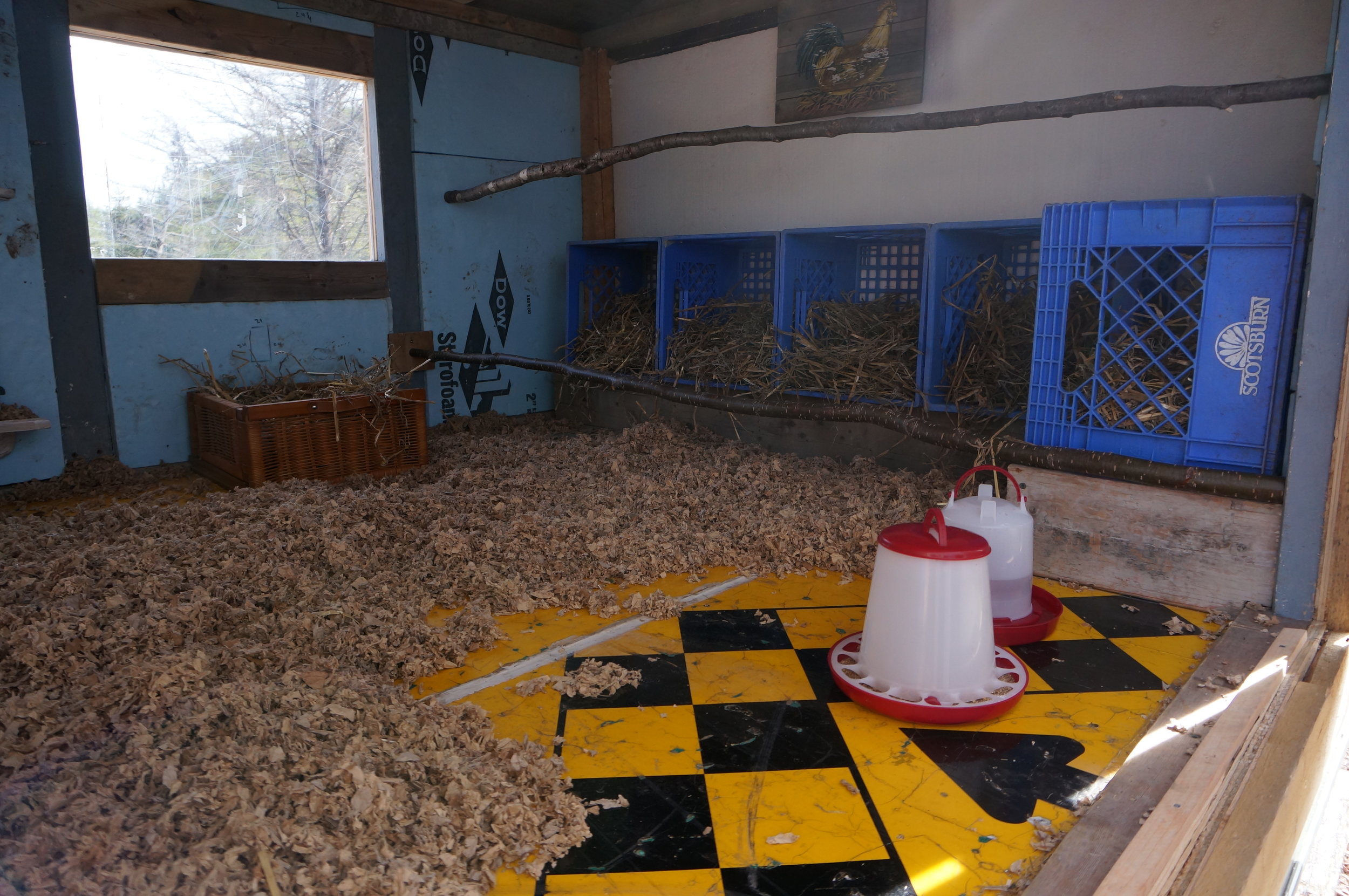 Chicken Coop Ready to Roost