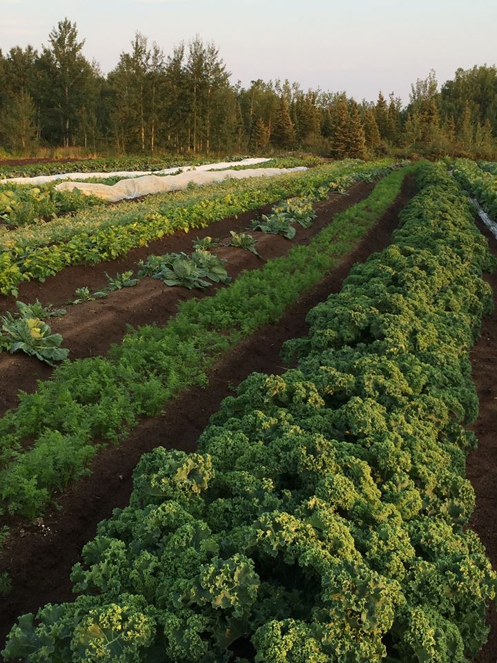 Nature's Best Farm in Happy-Valley Goose Bay