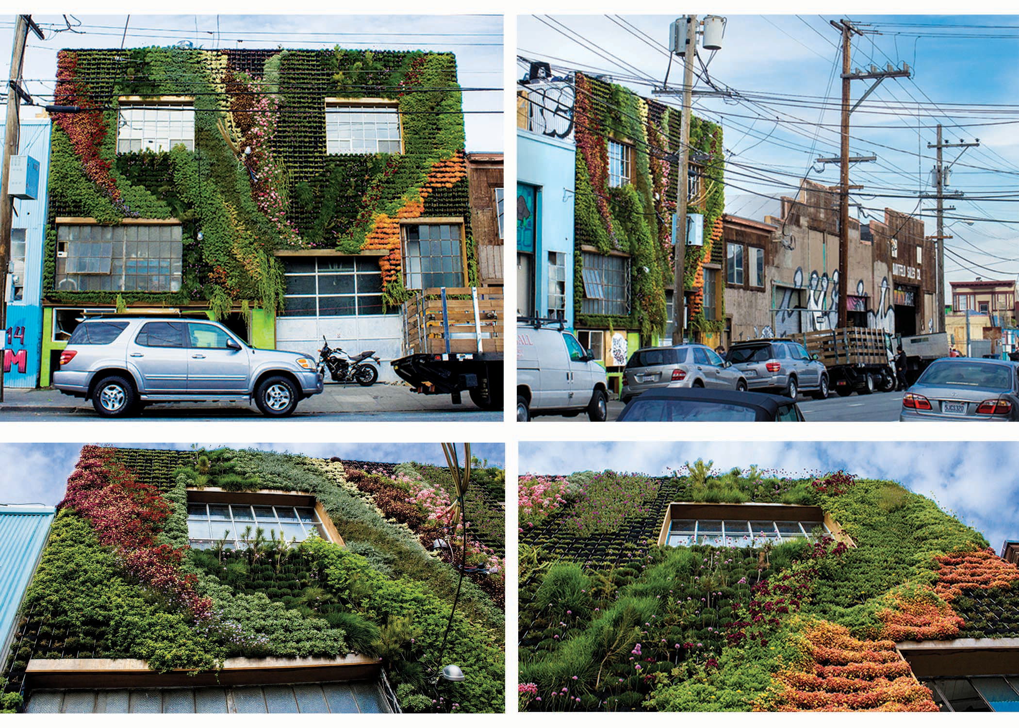 Partners in design: Amanda and Brandon Pruett from Living Green Design co-created this living wall in San Francisco's Mission District, turning a sterile heat island into a thriving green oasis.