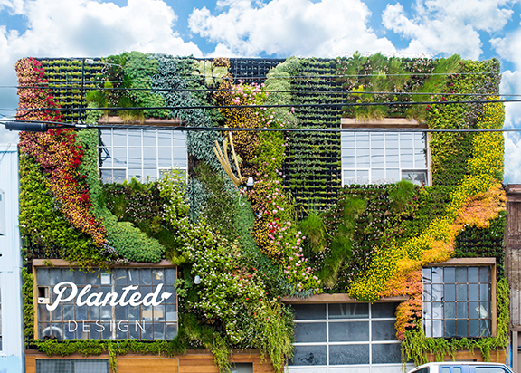 Commercial living wall by Planted Design