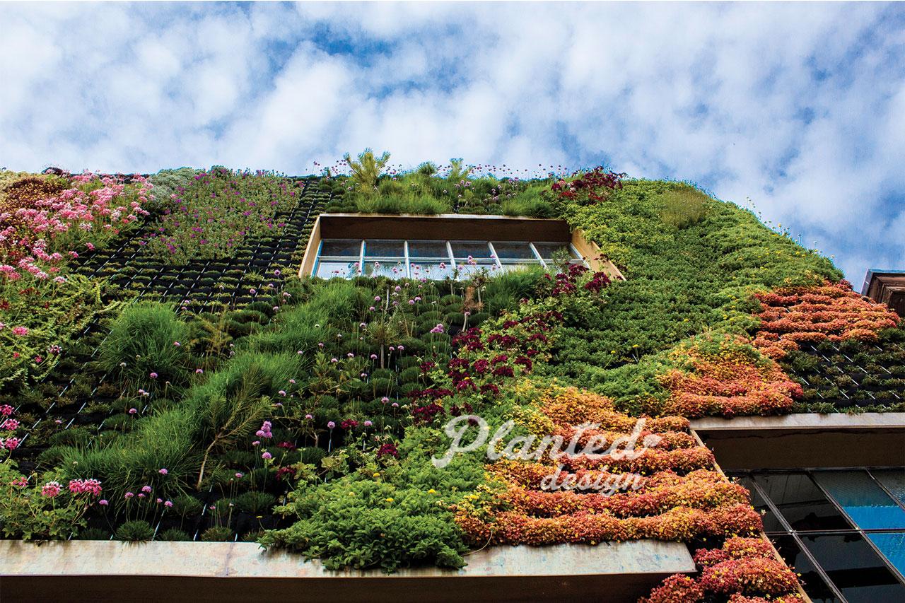 PlantedDesign-LivingWall-SF-BeSafehouse2.jpg