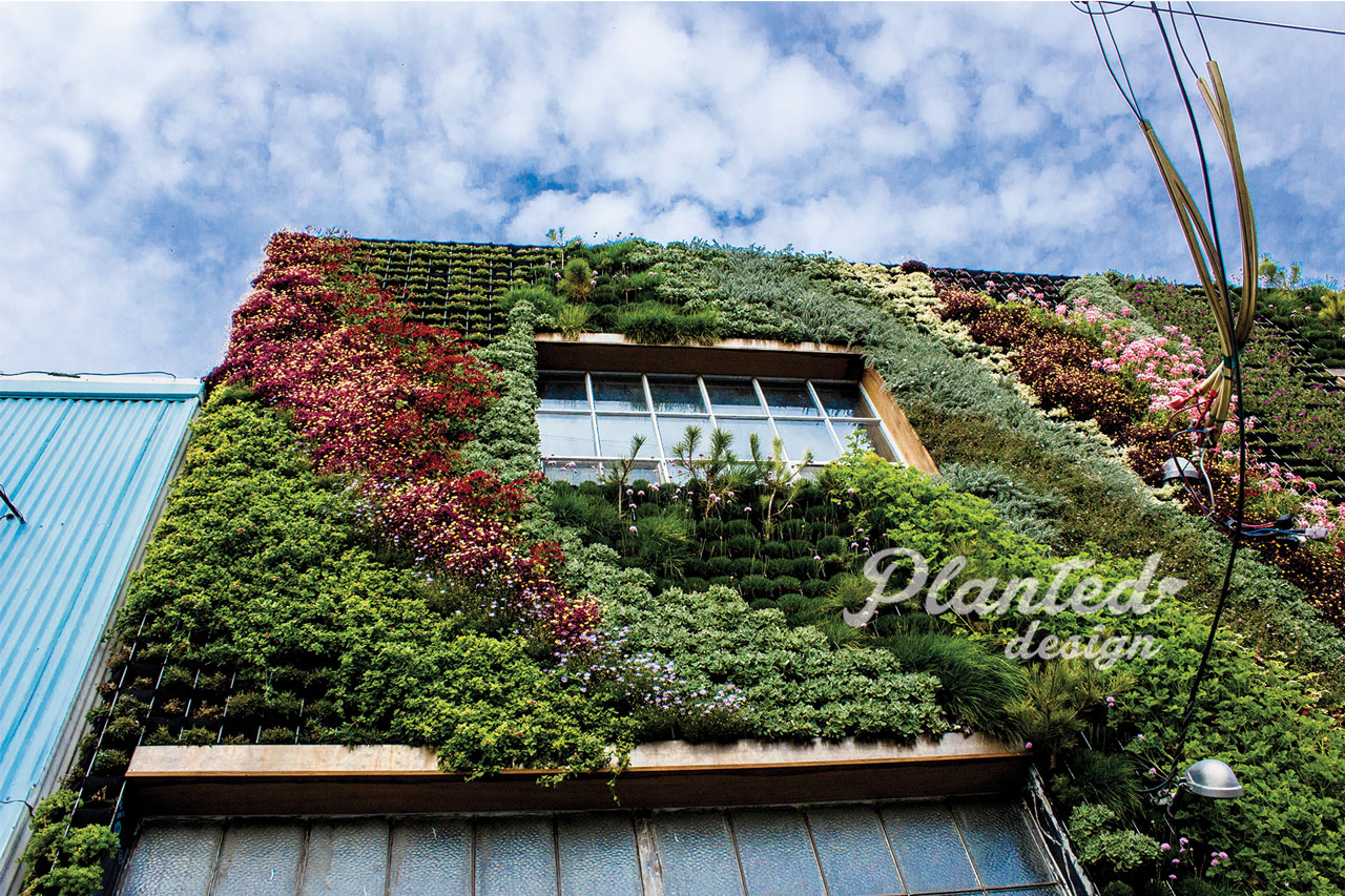 PlantedDesign-LivingWall-SF-BeSafehouse6.jpg
