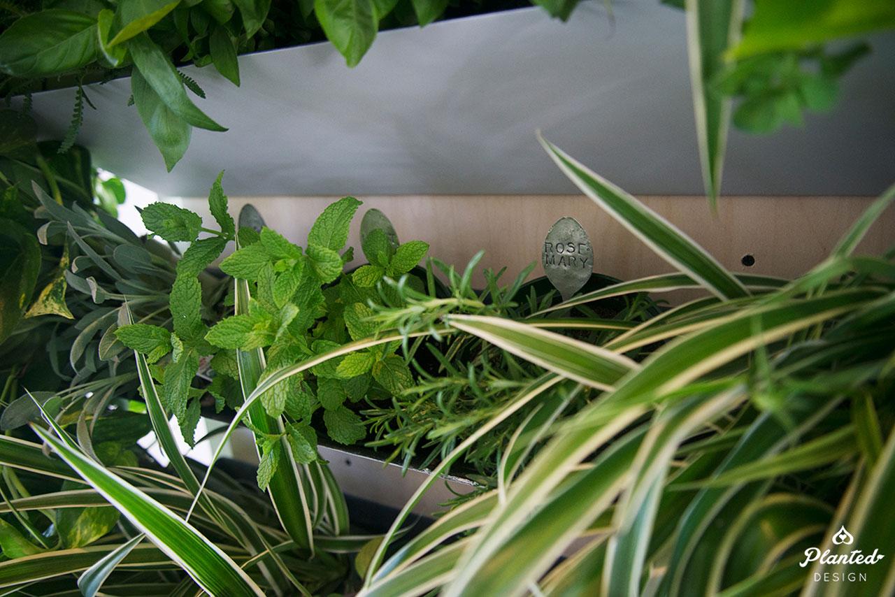 PlantedDesign-LivingWall-SF-ChrisMisner2.jpg