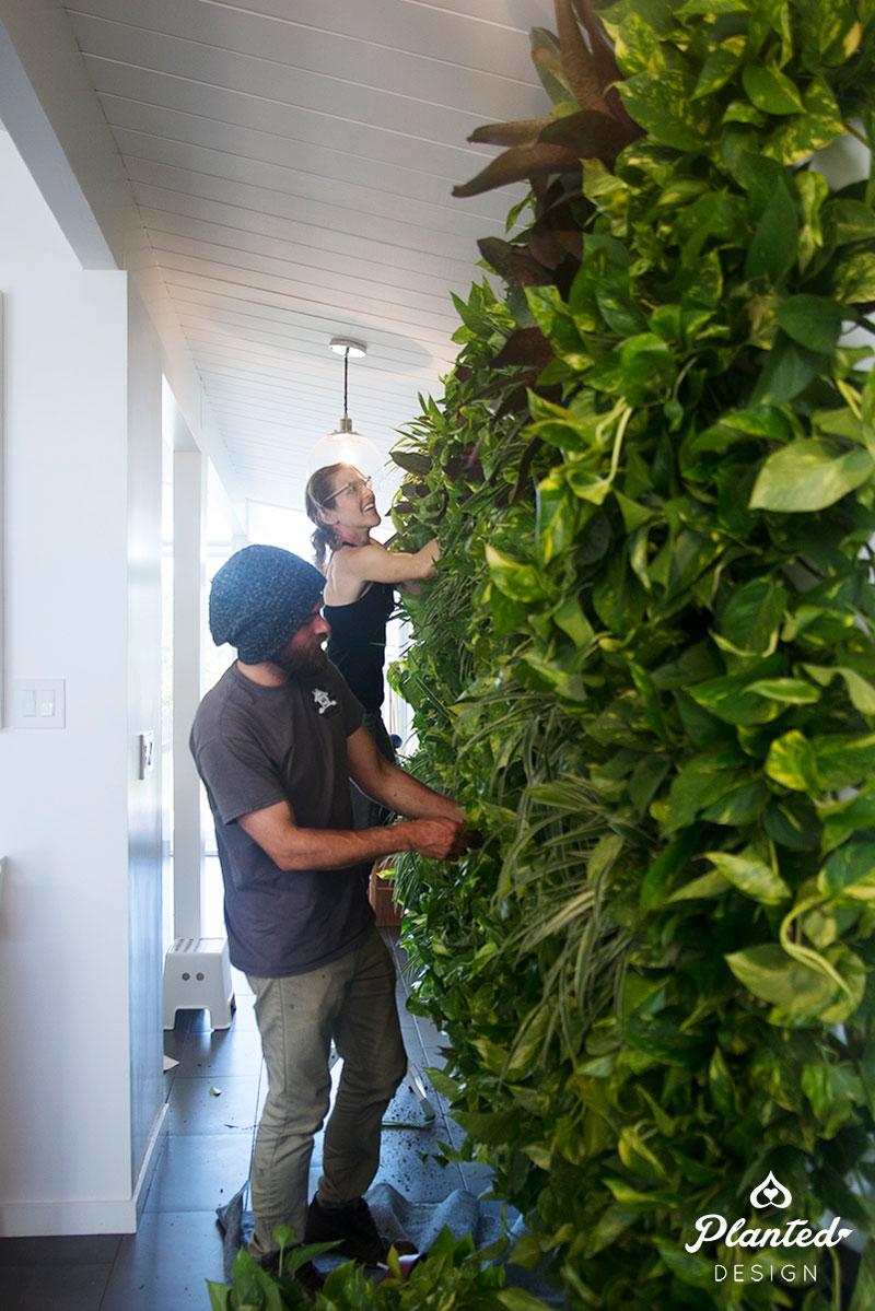PlantedDesign-LivingWall-SF-ChrisMisner10.jpg