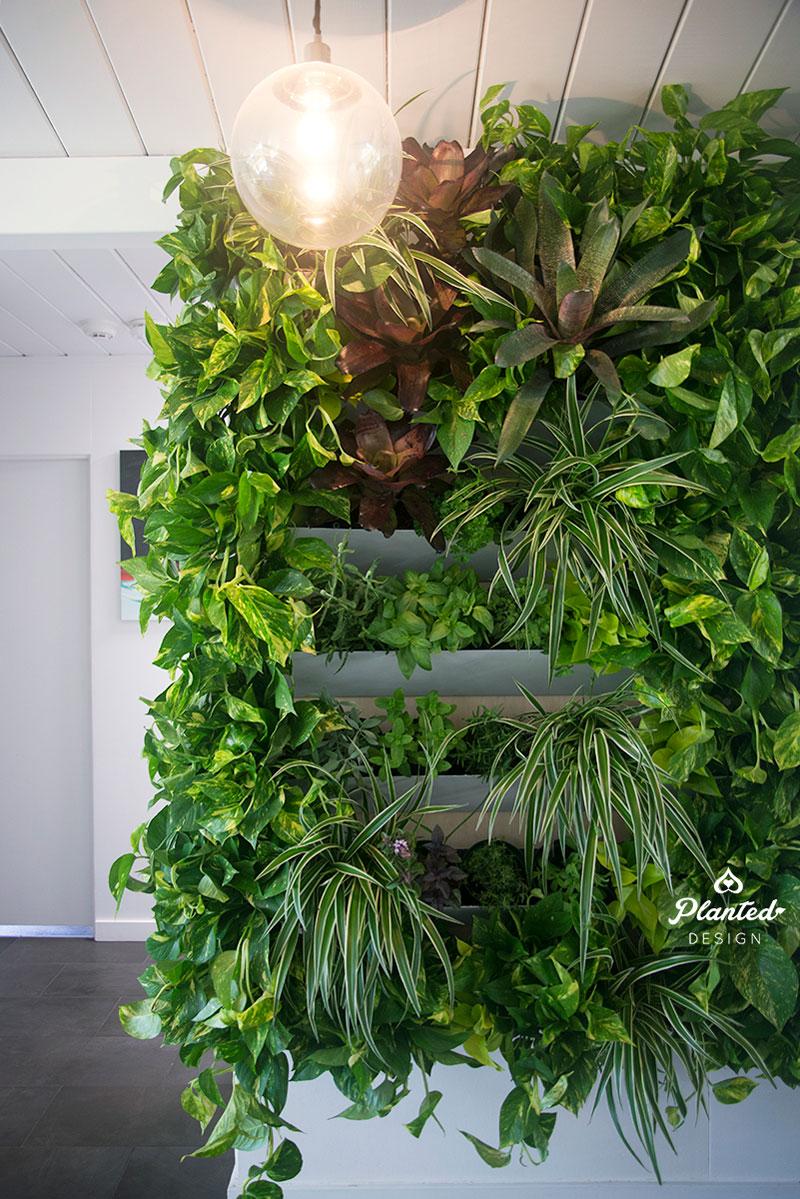 PlantedDesign-LivingWall-SF-ChrisMisner6.jpg