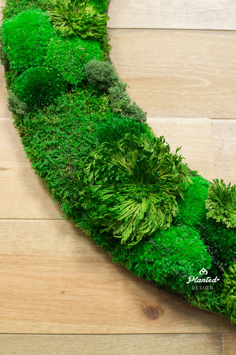 PlantedDesign-Moss-Wall-SF-CircleUp-6.jpg