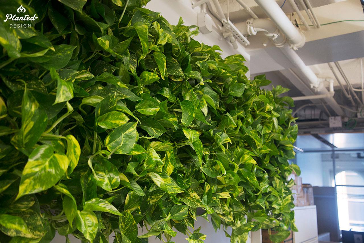 PlantedDesign-LivingWall-SF-NRDC1.jpg