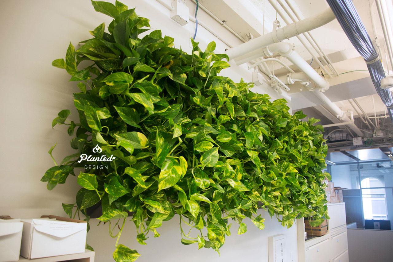 PlantedDesign-LivingWall-SF-NRDC11.jpg
