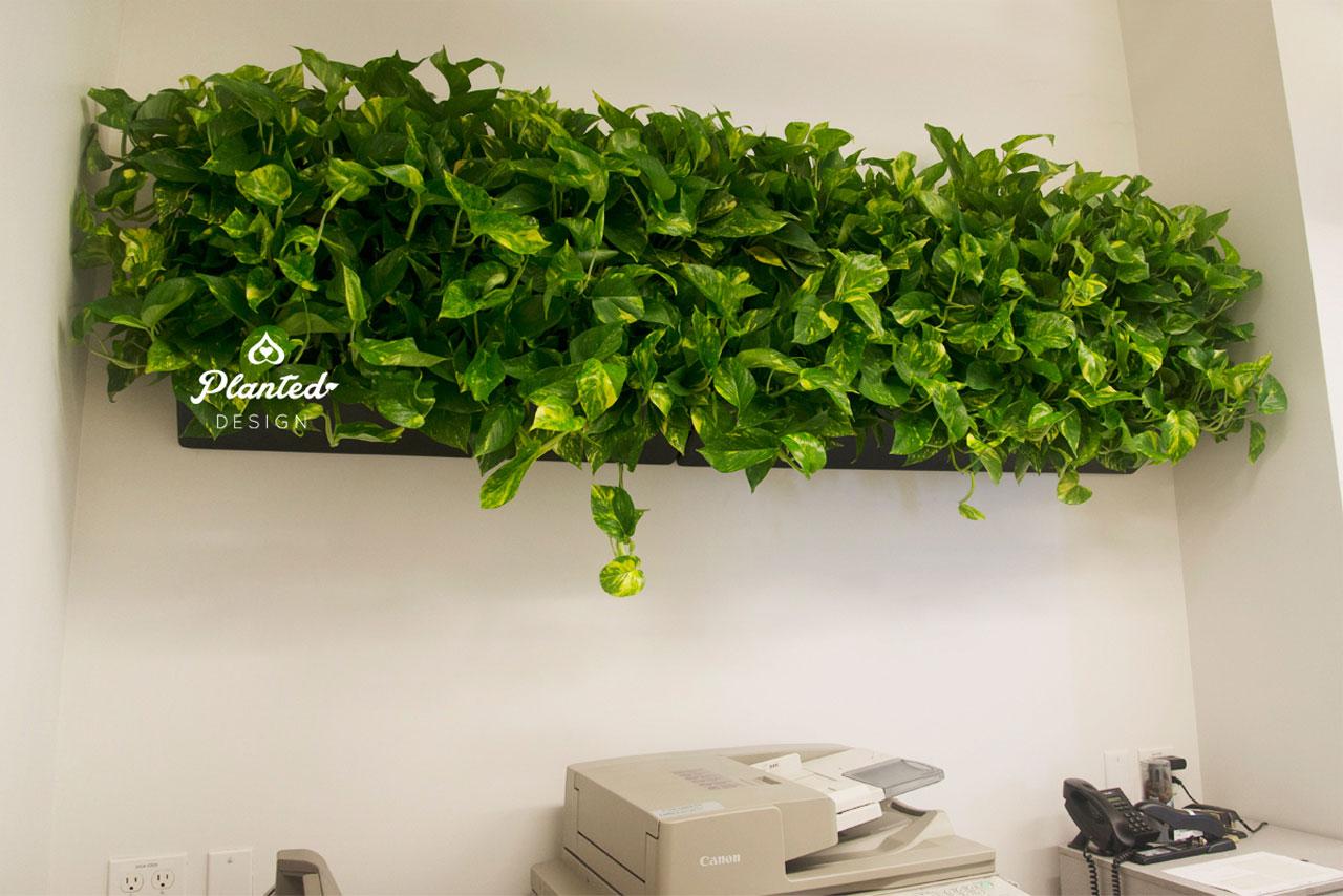 PlantedDesign-LivingWall-SF-NRDC9.jpg