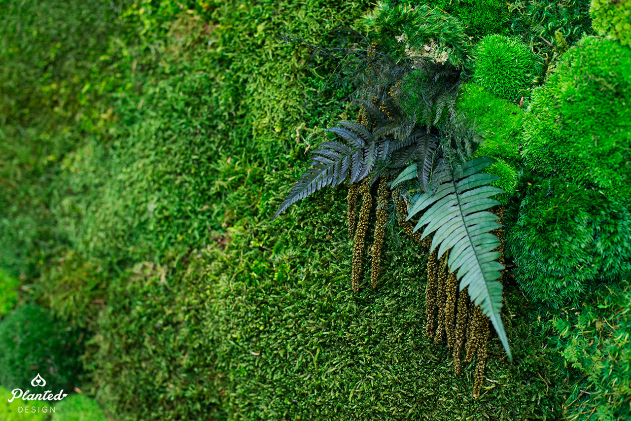 PlantedDesign-Moss-Wall-SF-TaylerCox-10.jpg