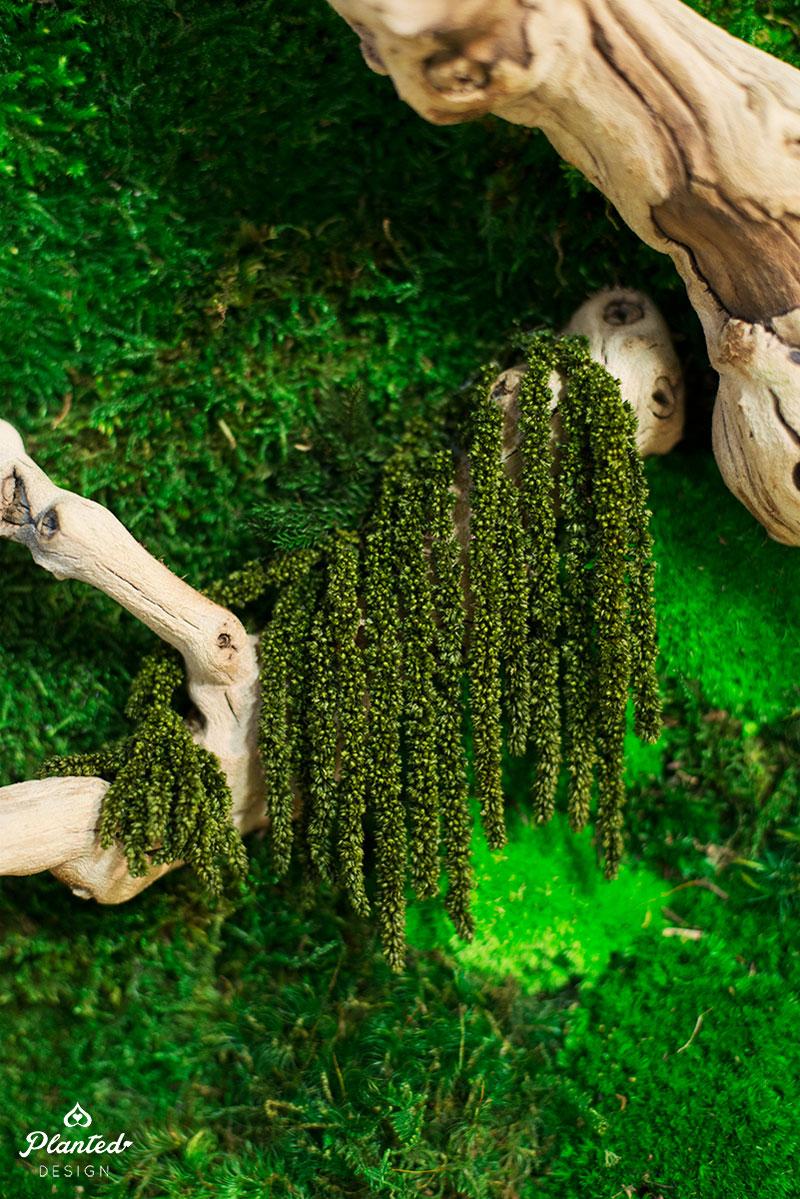 PlantedDesign-Moss-Wall-SF-TaylerCox-8.jpg