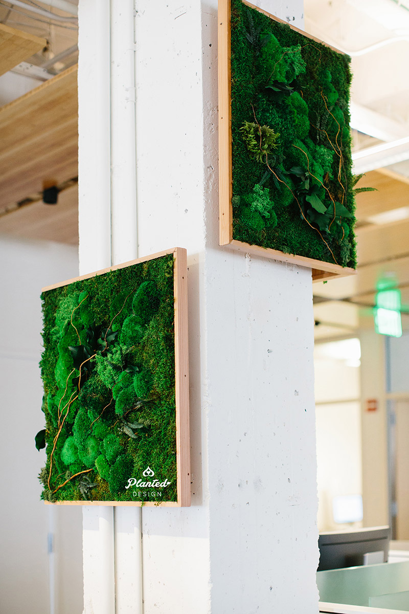 Planted-Design-Custom-Living-Preserved-Moss-Wall-Columns-Corner-NRDC-Offices-San-Francisco-Maintenance-Free-LogoWEB_3.jpg
