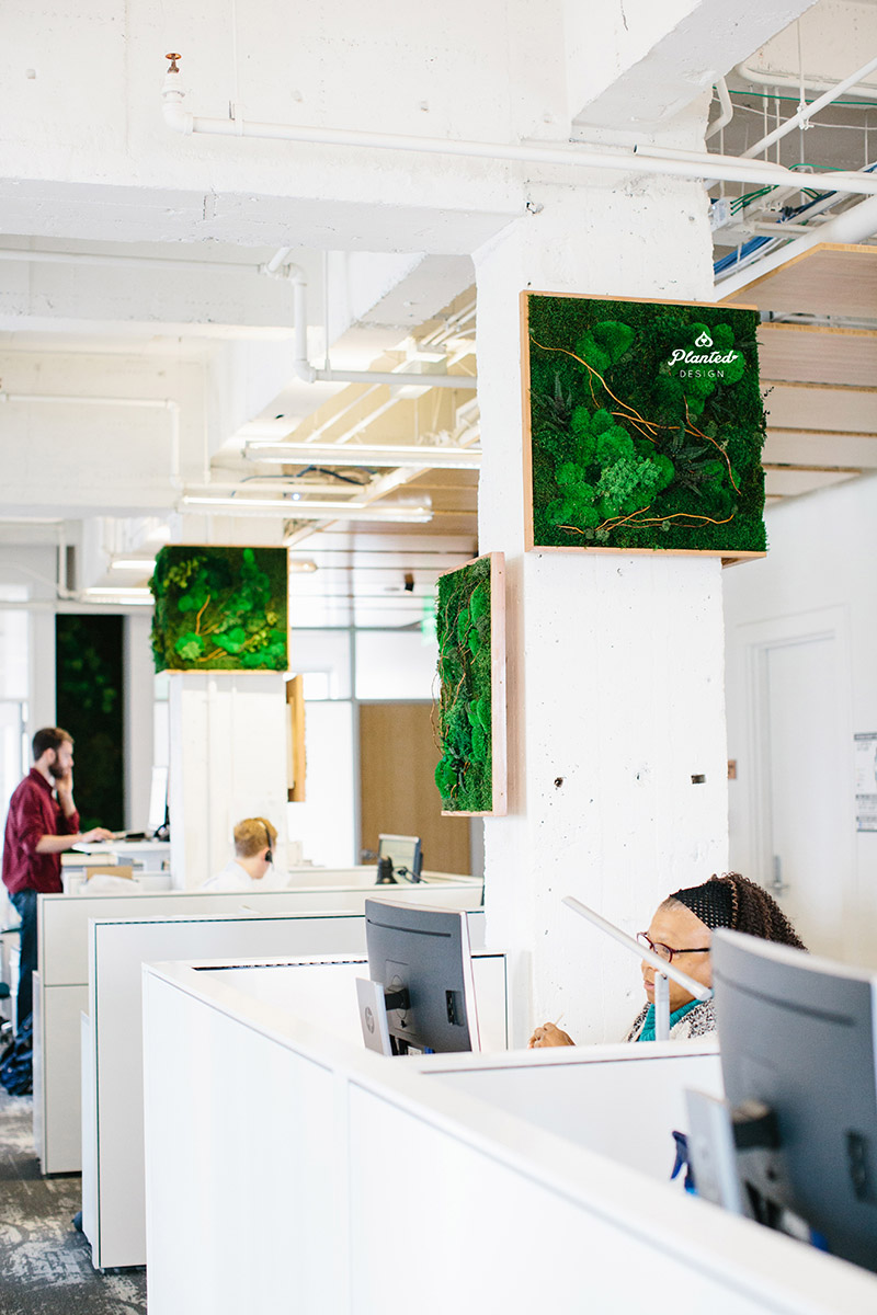 Planted-Design-Custom-Living-Preserved-Moss-Wall-Columns-Corner-NRDC-Offices-San-Francisco-Maintenance-Free-LogoWEB_18.jpg