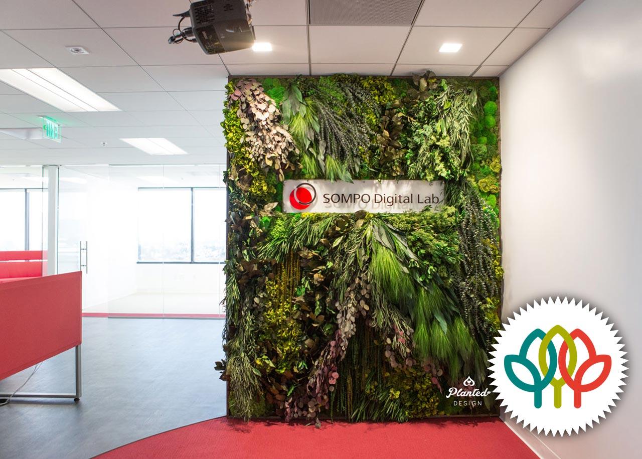 Sompo  - Moss Wall, American Hort Award Winner