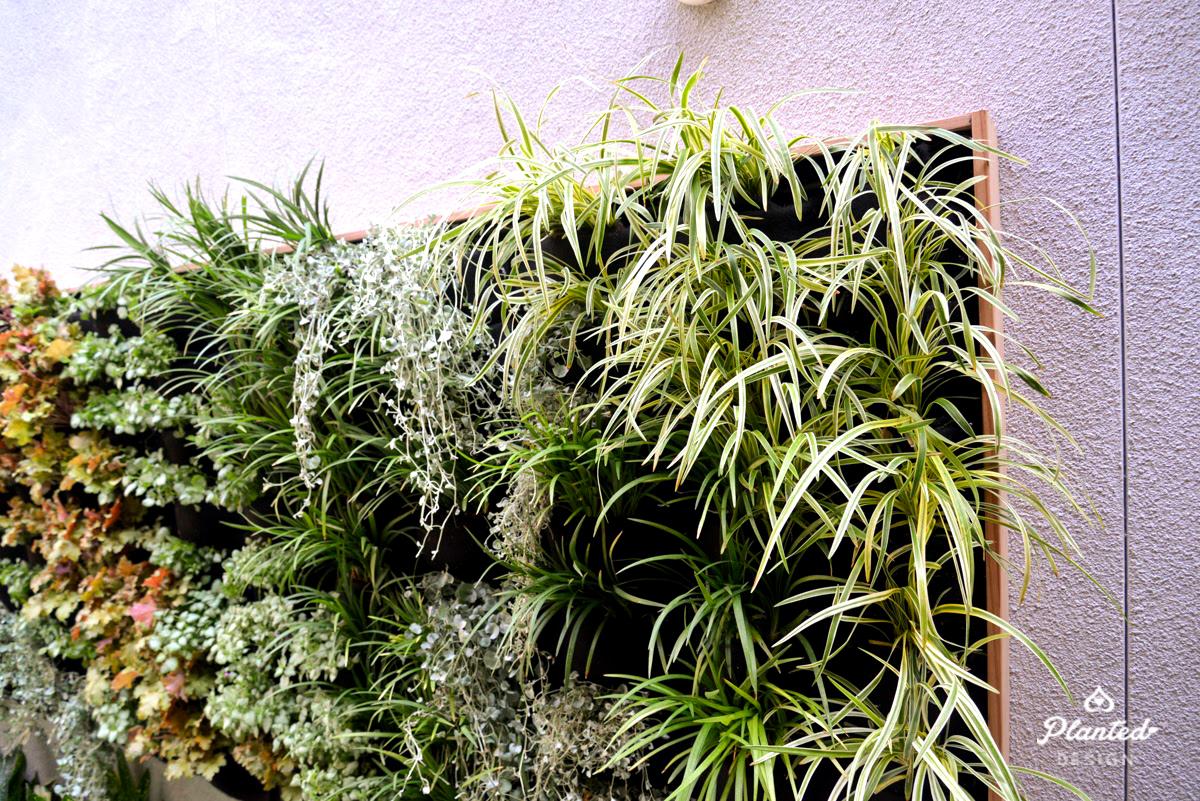 Florafelt Vertical Garden Installation by Planted Design Website 2.jpg