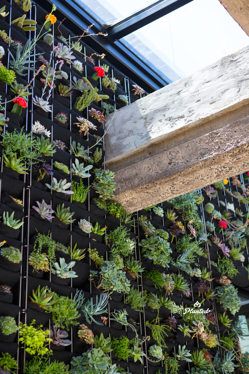 PlantedDesignCustomLivingSucculentPlantWallRussStreetSanFrancsicoLogo-13.jpg