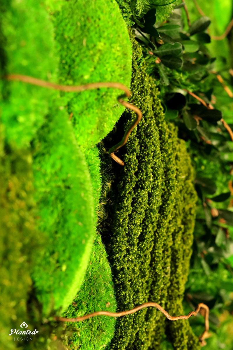 PlantedDesignGoogleAccessPerservedMossBerkleyB5Website.jpg