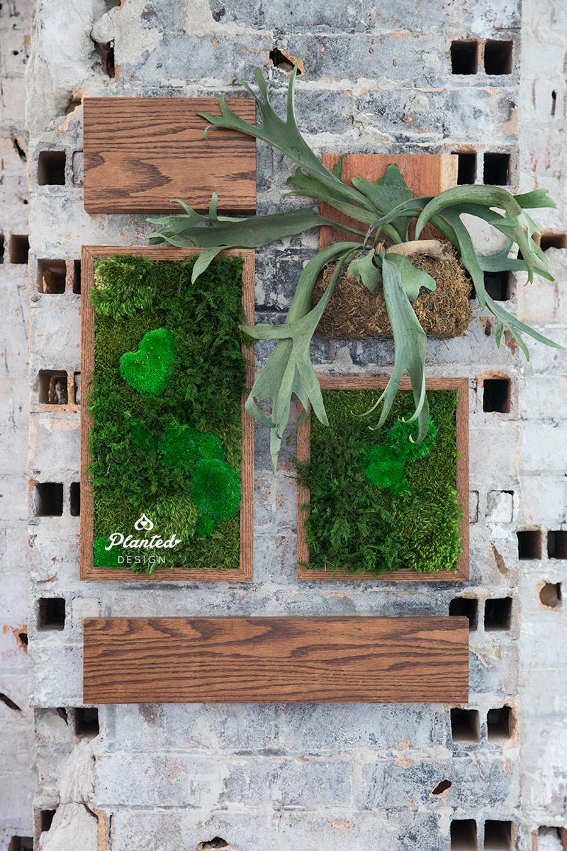 PlantedDesignTokenFreestandingPreservedMossWallSanFrancsico1.jpg