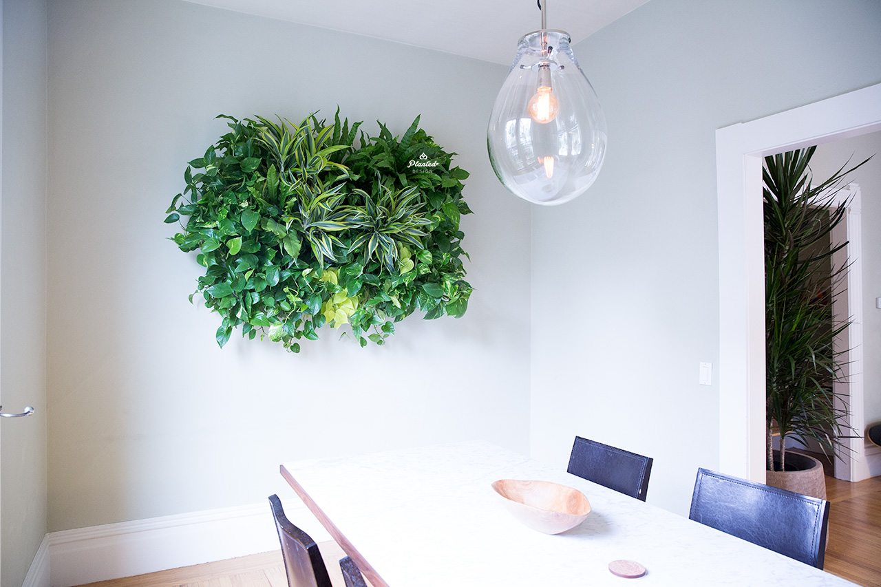 Residential  - Living Wall