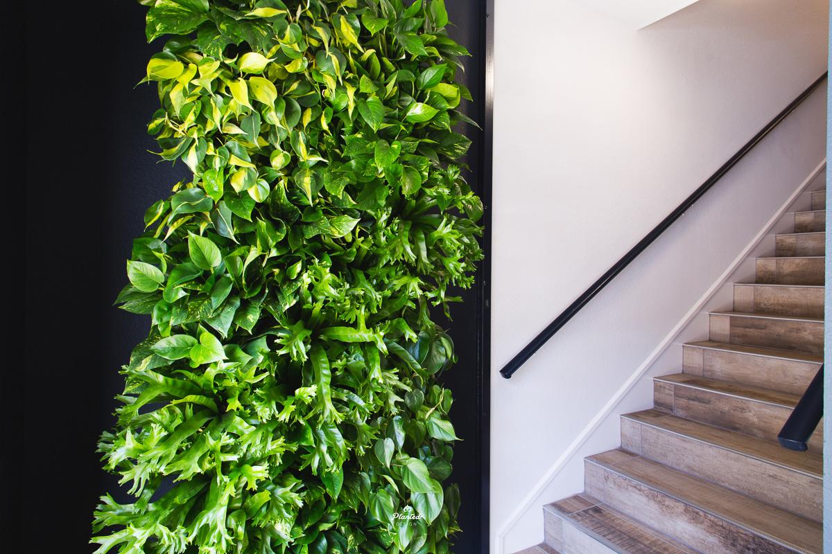 PlantedDesignLivingWallKirschenbaumLawCorporationOakland_2426.jpg