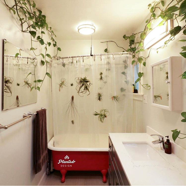 Home Shower Plants_Planted Design.jpeg
