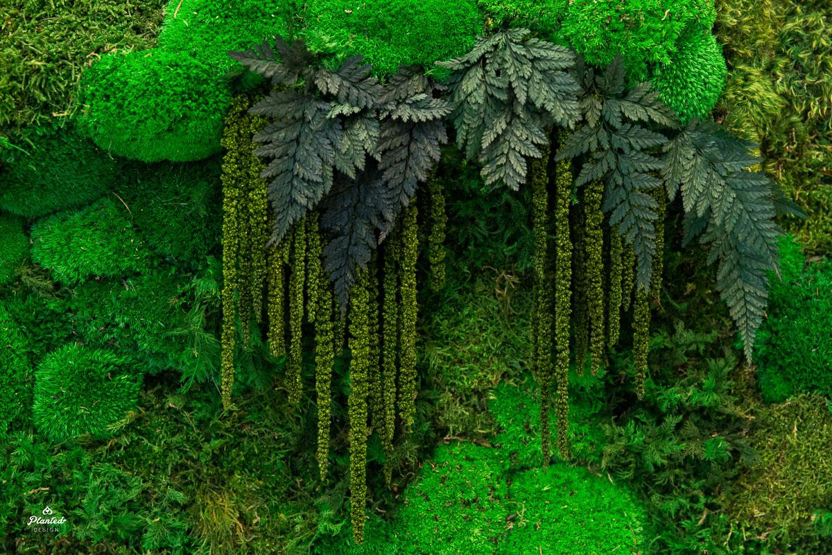 PlantedDesign_Moss_Frame_Ridge_Ventures_Reception_SanFrancisco_California_3890.jpg