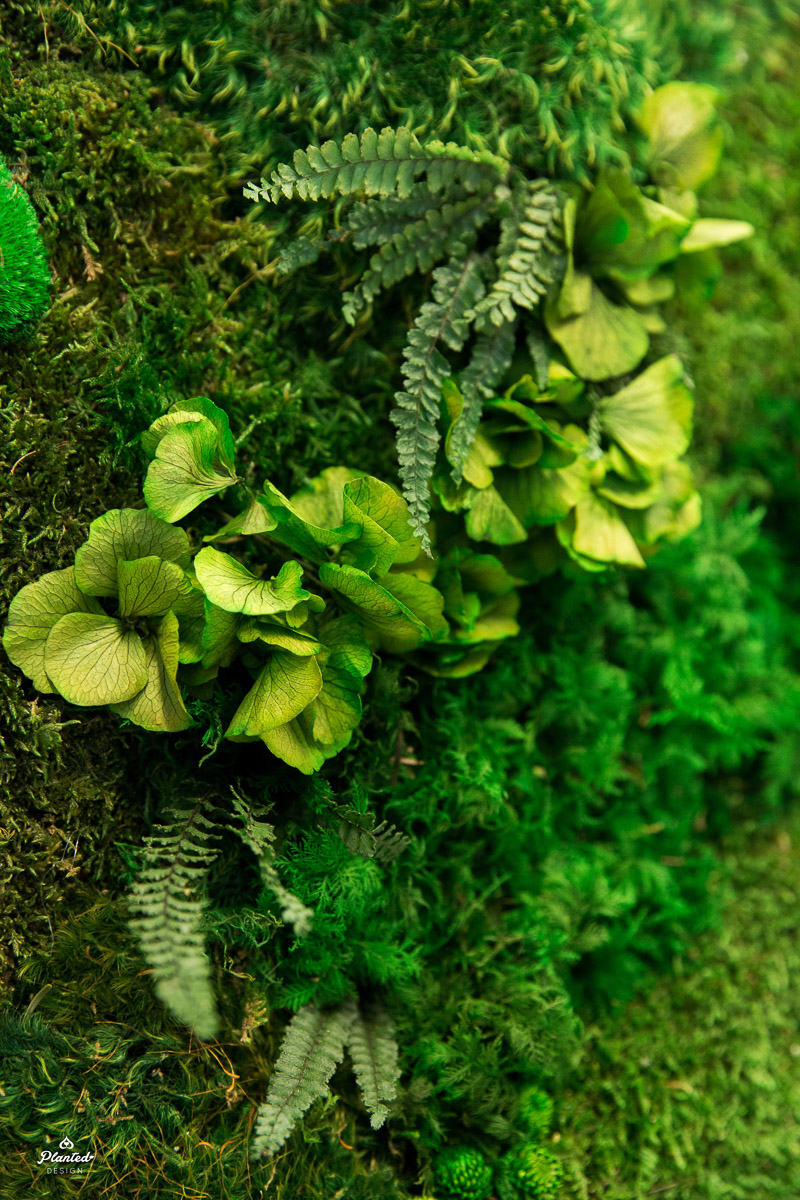 Planted Design Foliage Moss Wall