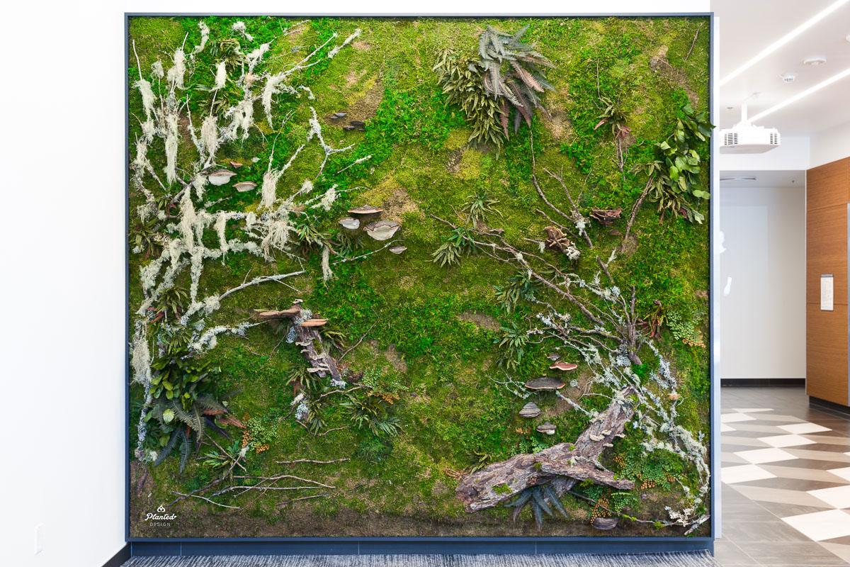 PlantedDesign_MossWall_AduroBiotech_Emeryville_Reception_Lobby_WoodBark_Mushrooms_Ferns_SpanishMoss_Branches_Riverbank_3651.jpg