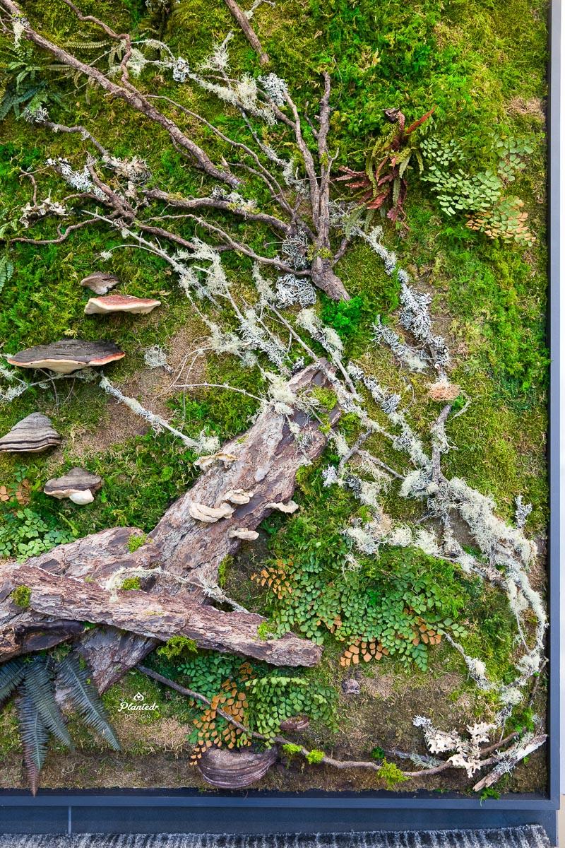 PlantedDesign_MossWall_AduroBiotech_Emeryville_Reception_Lobby_WoodBark_Mushrooms_Ferns_SpanishMoss_Branches_Riverbank_3675.jpg