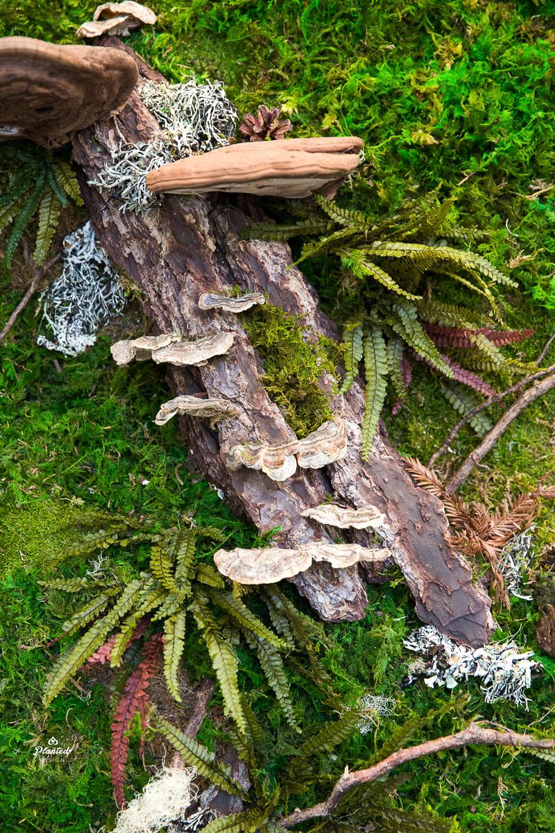 PlantedDesign_MossWall_AduroBiotech_Emeryville_Reception_Lobby_WoodBark_Mushrooms_Ferns_SpanishMoss_Branches_Riverbank_3692.jpg