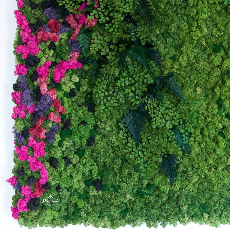 PlantedDesignBrotherVsBrotherHGTVMossPlantLivingWall_0969.jpg