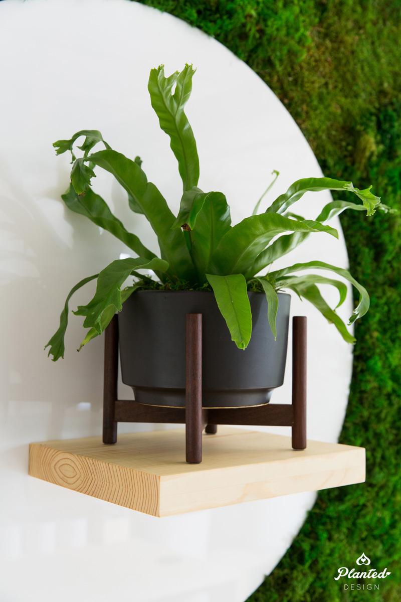 PlantedDesign_MossWall_LeonandGeorge_SanFrancisco_Showroom_Shelf_5065.jpg