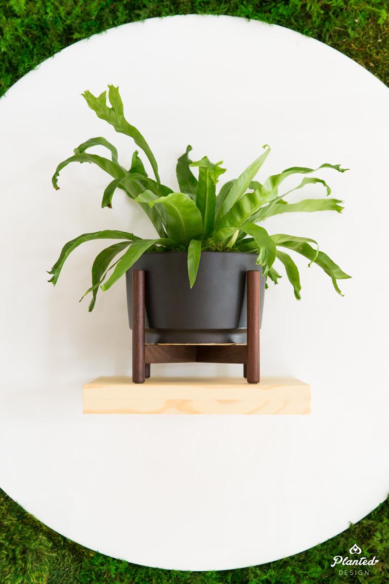 PlantedDesign_MossWall_LeonandGeorge_SanFrancisco_Showroom_Shelf_5069.jpg