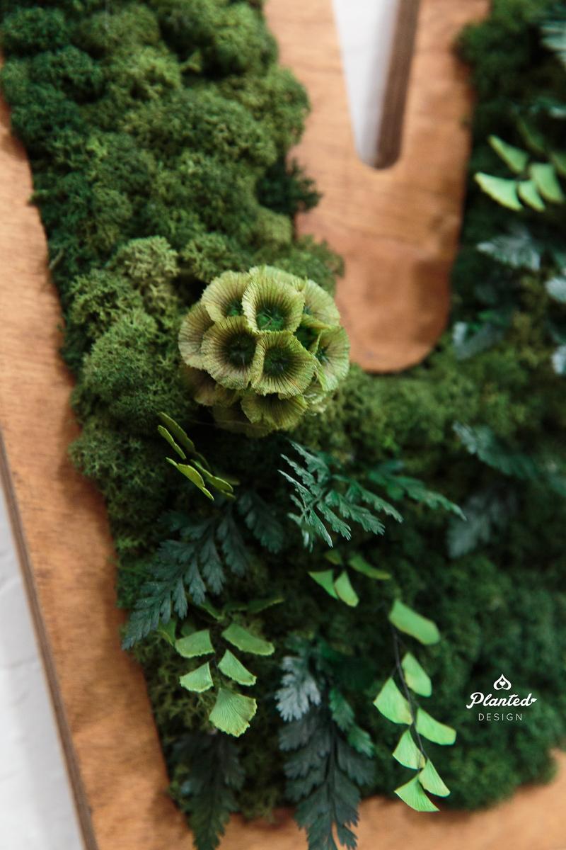 PlantedDesign_Mossed_M_Emeryville_California_9282.jpg