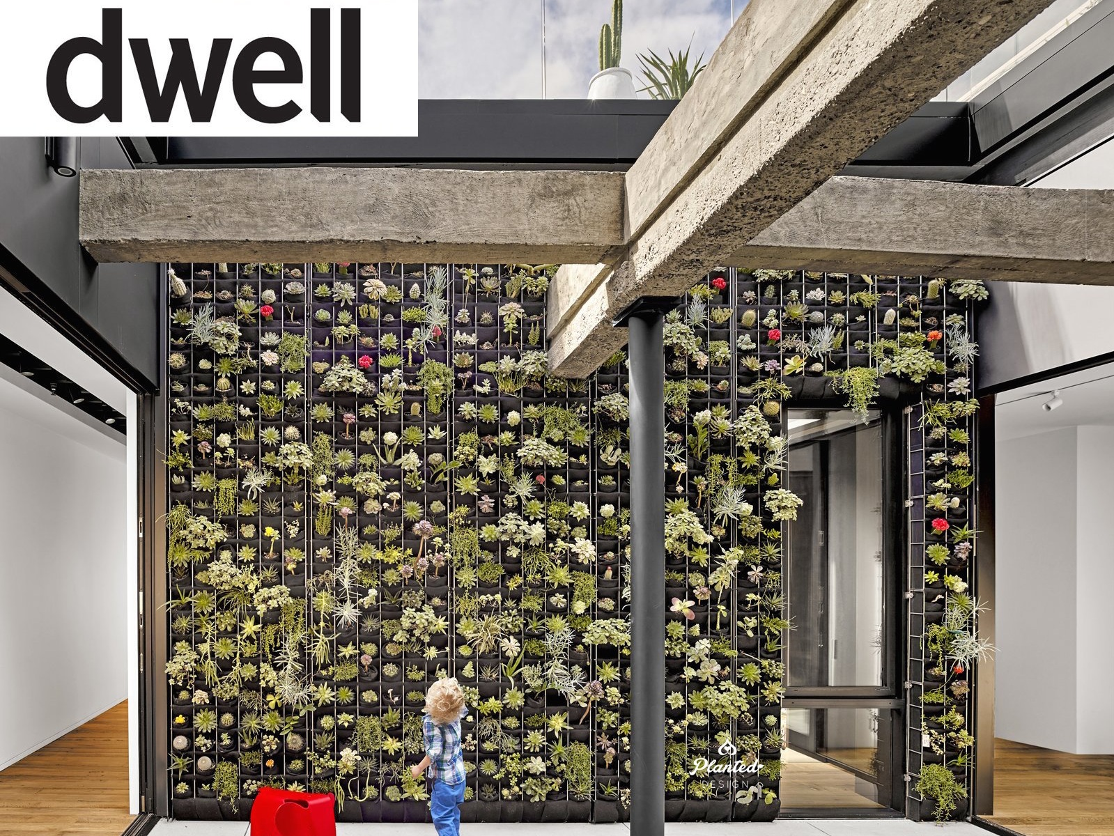 Residential  - Dwell Feature Living Wall