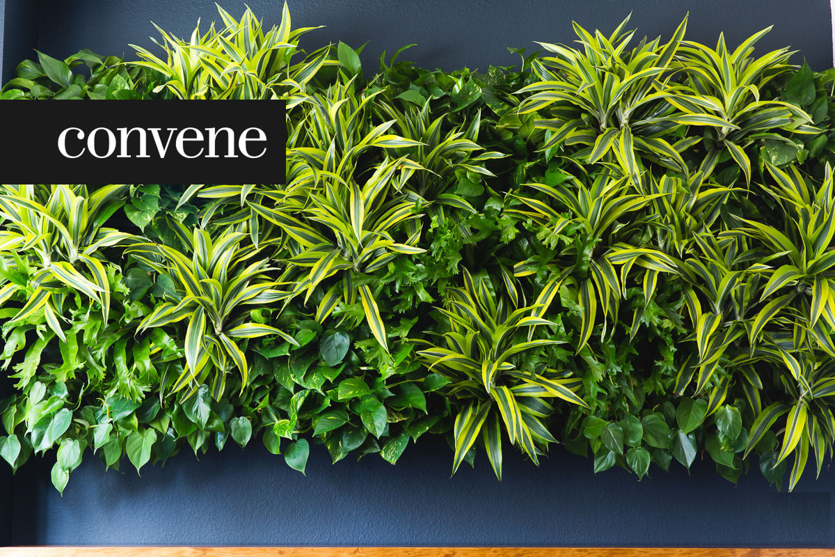 """Living Wall"" Creator Amanda Goldberg on Why Every Office Needs Greenery"