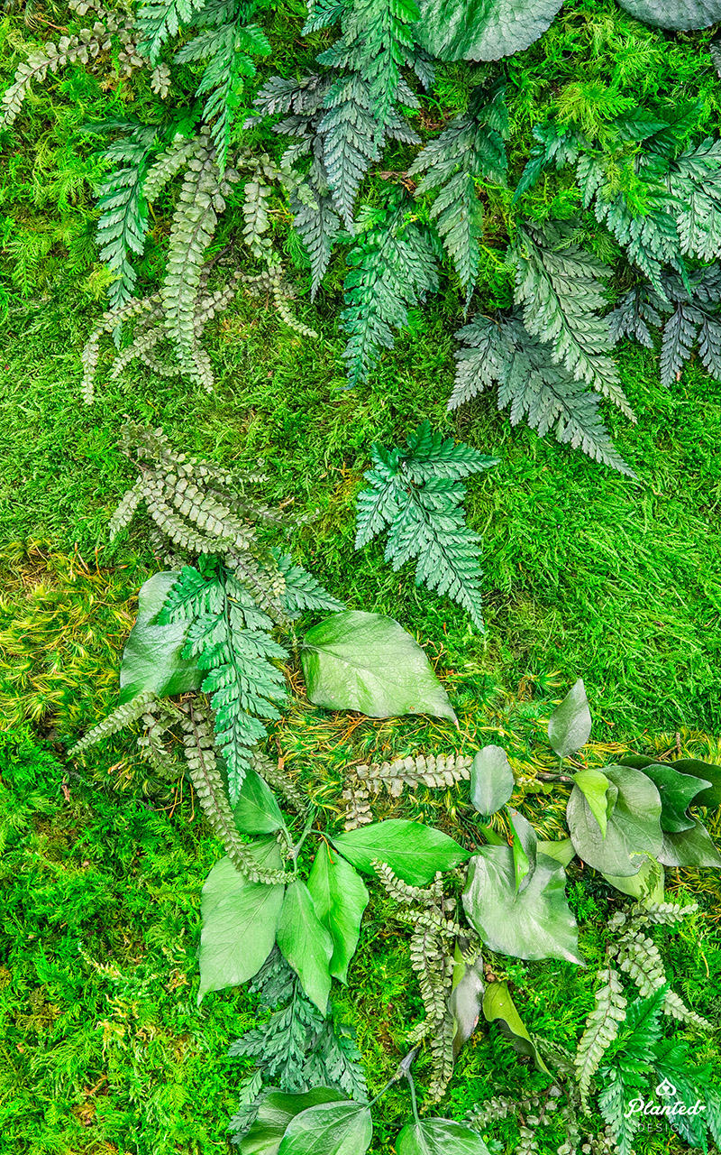PlantedDesign_Swarm_Living_Moss_Walls_Reception_Lobby_Santa_Clara_California_05.jpg
