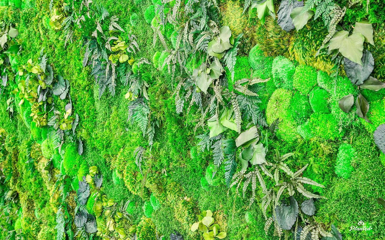 PlantedDesign_Swarm_Living_Moss_Walls_Reception_Lobby_Santa_Clara_California_11.jpg